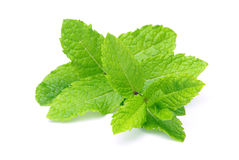 Peppermint. Fresh twig and leaves from peppermint royalty free stock photos