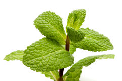 Peppermint. On a white background royalty free stock photography