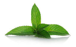 Peppermint royalty free stock images