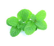 Peppermint. Fresh mint isolate on white background Stock Photos