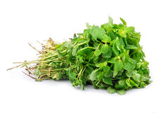 Peppermint. Punch of fresh peppermint leaves royalty free stock image