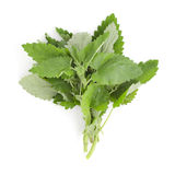 Peppermint Stock Images