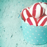 Peppermint candy in light blue paper cupcake Stock Image