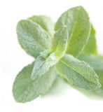 Peppermint close-up Royalty Free Stock Photos