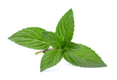 Peppermint closeup leaf Royalty Free Stock Images