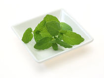 Peppermint on a dish Stock Photography