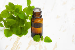 Peppermint essential oil Royalty Free Stock Images