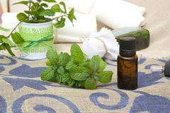 Peppermint essential oil Stock Images
