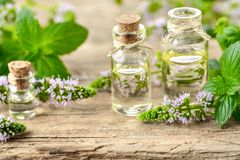 Peppermint essential oil and peppermint flowers on the wooden board. Peppermint essential oil and peppermint flowers on the wooden table Stock Image
