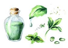Free Peppermint Essential Oil Set. Watercolor Hand Drawn Illustration. Royalty Free Stock Photos - 104305168