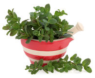 Peppermint Herb. Leaf sprigs in a red and cream stone striped mortar with pestle over white background royalty free stock photography