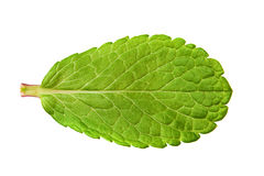 Peppermint herb leaf Stock Image