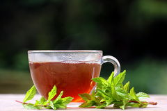 Peppermint herbal tea. A glass cup with herbal tea in, and sprigs of peppermint herb lying beside Stock Photos