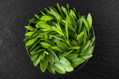 Peppermint. Juicy, fresh, aromatic green mint Royalty Free Stock Images