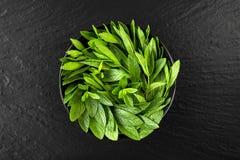 Peppermint. Juicy, fresh, aromatic green mint Stock Photos