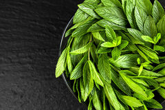 Peppermint. Juicy, fresh, aromatic green mint. On a black background Royalty Free Stock Image