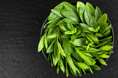 Peppermint. Juicy, fresh, aromatic green mint. On a black background Stock Photography