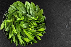 Peppermint. Juicy, fresh, aromatic green mint. On a black background Stock Image