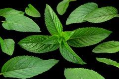 Peppermint leaf on black Stock Photo