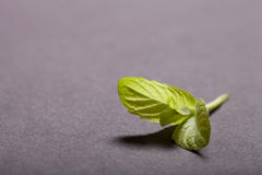 Peppermint leaf on the black slate background. Shallow depth of Stock Photos