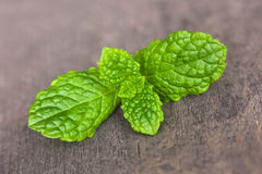 Peppermint leaf. A peppermint leaf on a board Royalty Free Stock Image