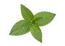 Peppermint leaf colseup on white Royalty Free Stock Photos