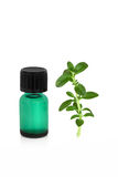 Peppermint Leaf and Essence Stock Photos