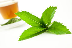 Peppermint leaf with herbal tea. Fresh peppermint leaf, herbal tea in background Royalty Free Stock Photos