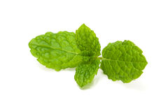Peppermint leaf. A peppermint leaf on white background Royalty Free Stock Photos