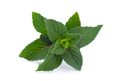 Peppermint leaf on white Royalty Free Stock Photos