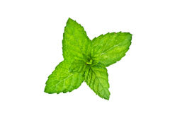 Peppermint leaves. With shallow DOF isolated on white background. Clipping path included Stock Photography