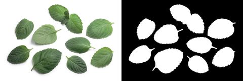 Peppermint leaves from above, paths Stock Photo