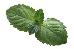 Peppermint leaves from above, paths Royalty Free Stock Image