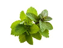 Peppermint and lemon balm Stock Photography