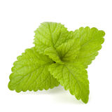 Peppermint or  mint bunch Stock Image