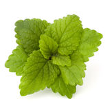 Peppermint or mint bunch. Isolated on white background cutout royalty free stock image
