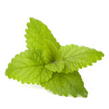 Peppermint or  mint bunch Royalty Free Stock Photography