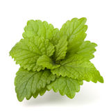 Peppermint or  mint bunch Stock Images
