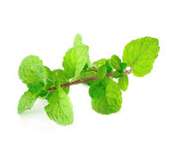 Peppermint or mint bunch Royalty Free Stock Photos