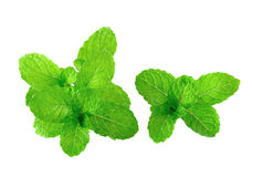 Peppermint or mint bunch  on white background Royalty Free Stock Photo