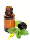 Peppermint oil. Bottle of peppermint oil and fresh mint isolated on white stock image
