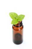 Peppermint oil Royalty Free Stock Photo