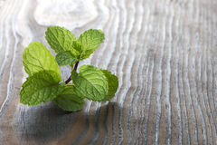 Peppermint. On old wooden table background Royalty Free Stock Images