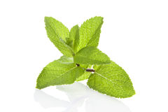 Peppermint over white. Stock Images