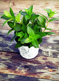 Peppermint in pot on wood table Royalty Free Stock Image