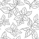 Peppermint seamless pattern. Peppermint herb seamless pattern on white background stock illustration