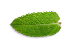Peppermint, spearmint. Medicinal plant. A close-up of a sweet and fresh leaf of mint. Bright green mint leaves. Stock Images