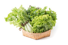 Peppermint, sweet basil, lettuce in bamboo basket isolated Stock Images