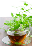 Peppermint tea Stock Photography