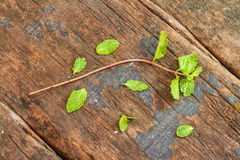 The peppermint on wood texture. Stock Photo